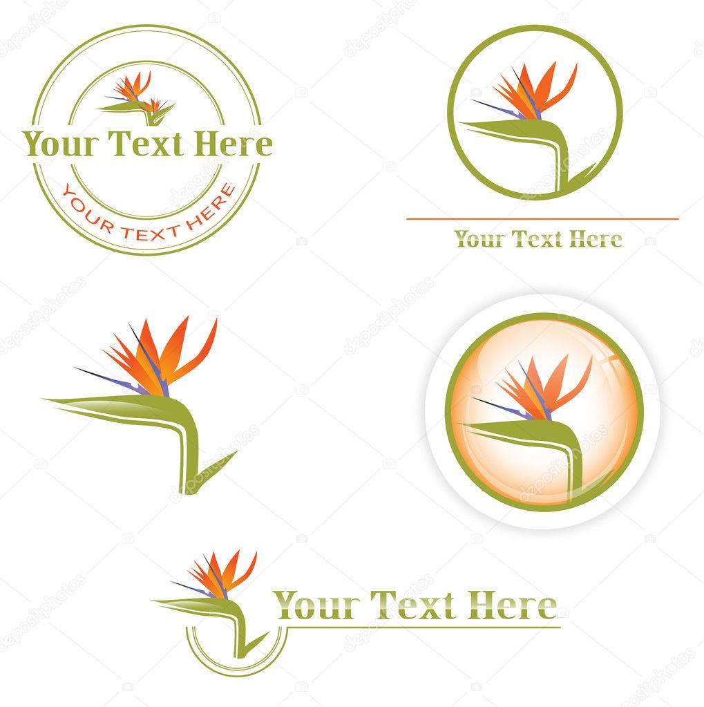 Designs with Strelitzia