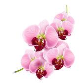 Fotografie Orchid flower vector background