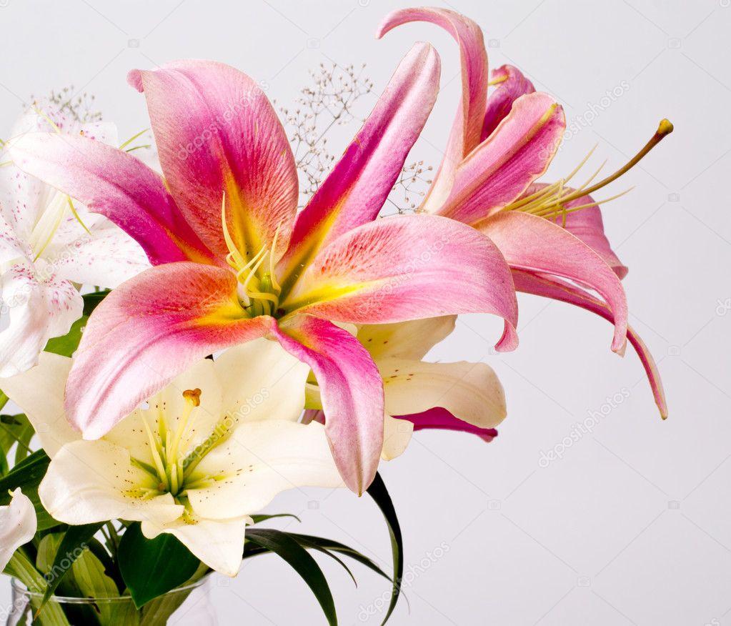 Розовые лилии цветы