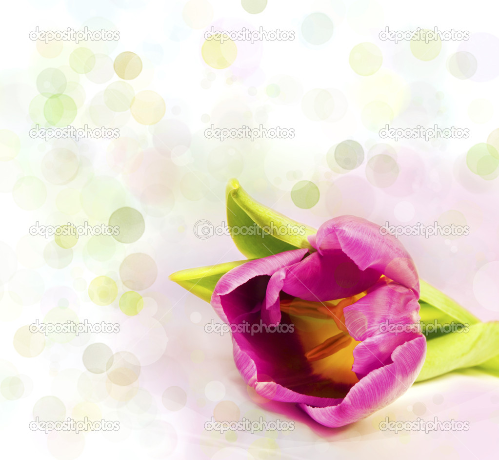 Flower over colorful light background