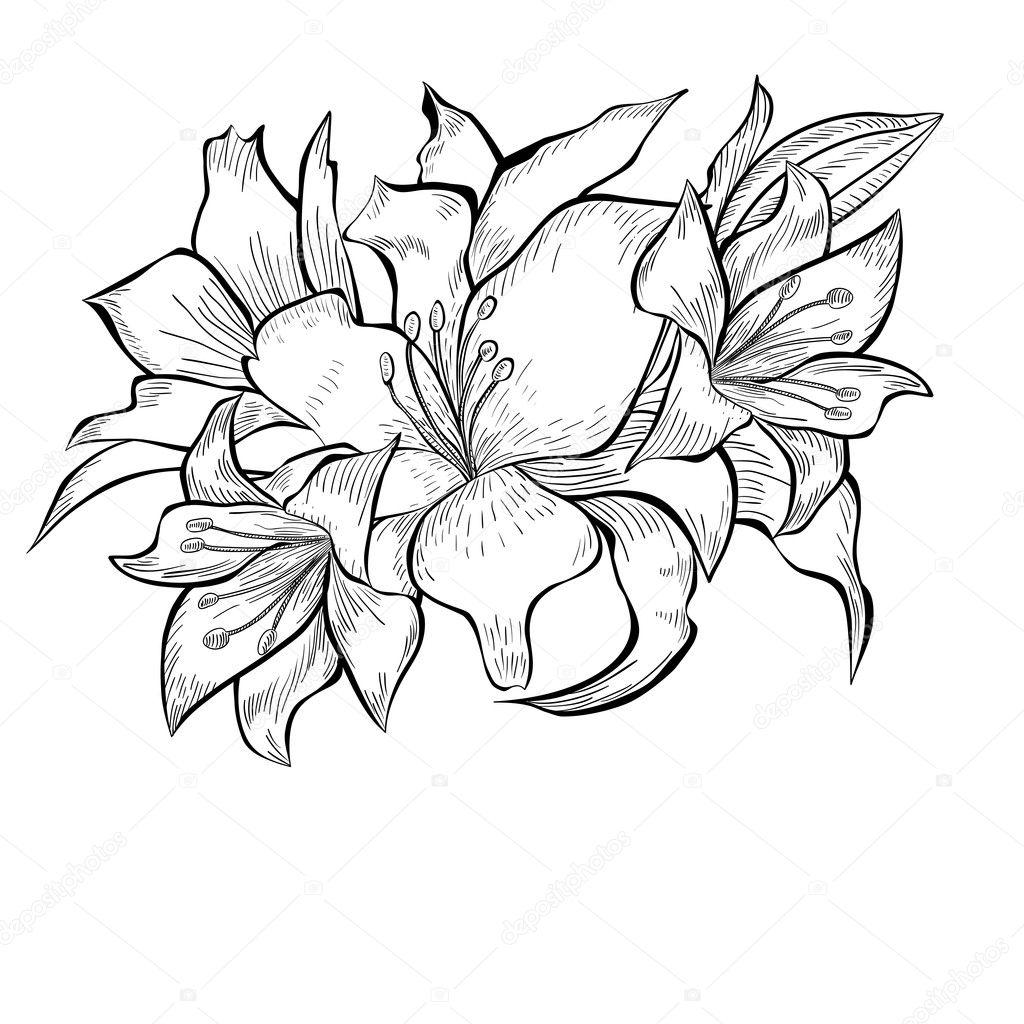 ユリの花の黒と白のイラスト ストックベクター Jershova 12017159