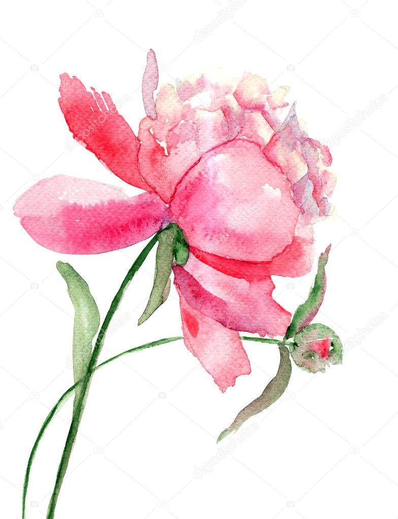 Beautiful Peony flower, Watercolor painting