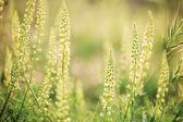 Divoké květiny na slunci