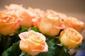 Fotografie schöne rosa rosen