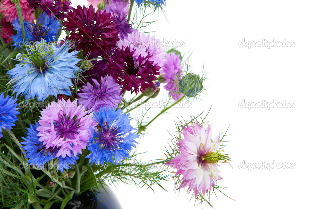 Bouquet of cornflowers.