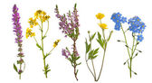Pět divokých květin, izolované na bílém
