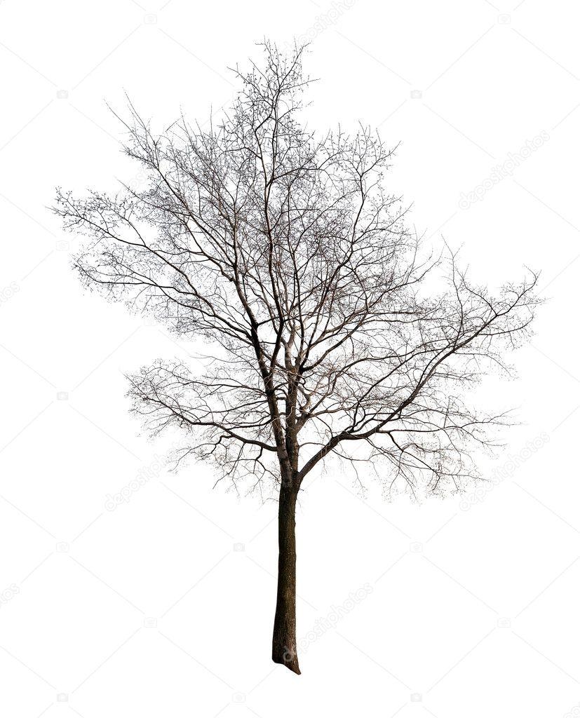 Lämnar Gratis Isolerad På Vita Träd Stockfotografi Drpas 12357320