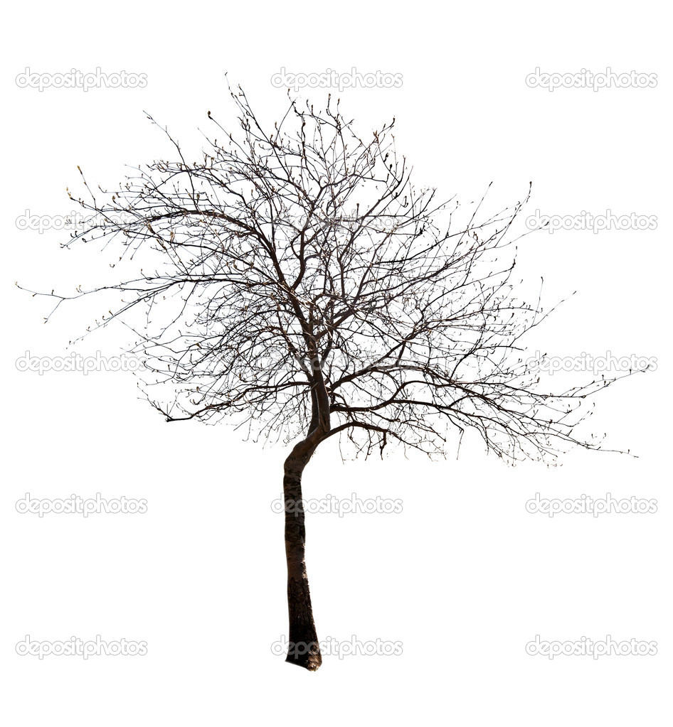 Små Blad Gratis Isolerade Träd Stockfotografi Drpas 12357338