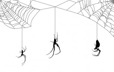 web with three spiders