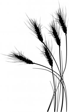 illustration with wheat silhouettes on white