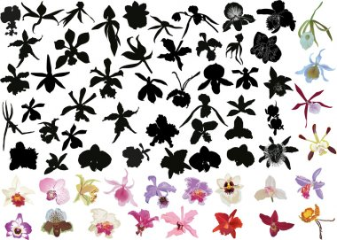 large set of black and color orchids isolated on white