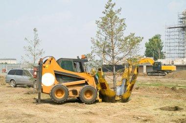 Transplantation of trees
