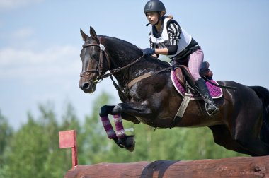 Equestrian sport. Woman eventer on horse negotiating cross-country Fixed obstacle Log fence