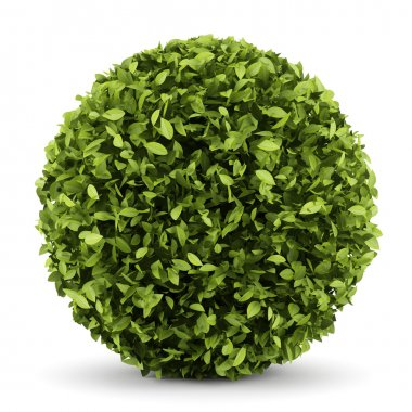 Decorative round plant isolated on white background