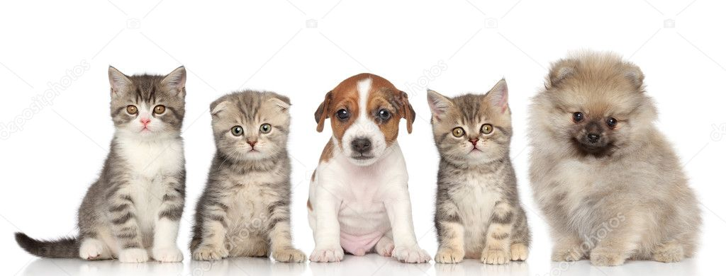 Group Of Kittens And Puppies On A White Background Stock Photo