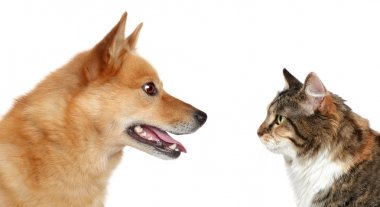 Dog and Cat looking at each other