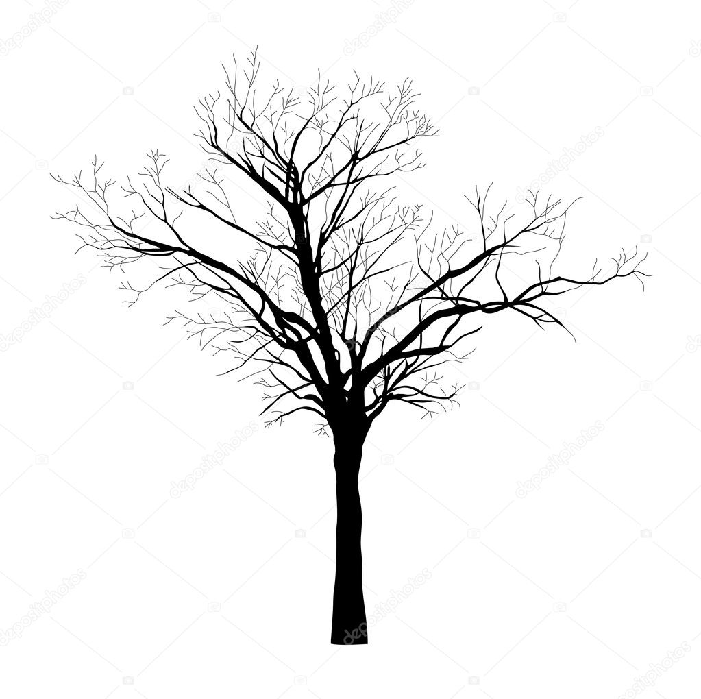 Black silhouette of the tree - vector
