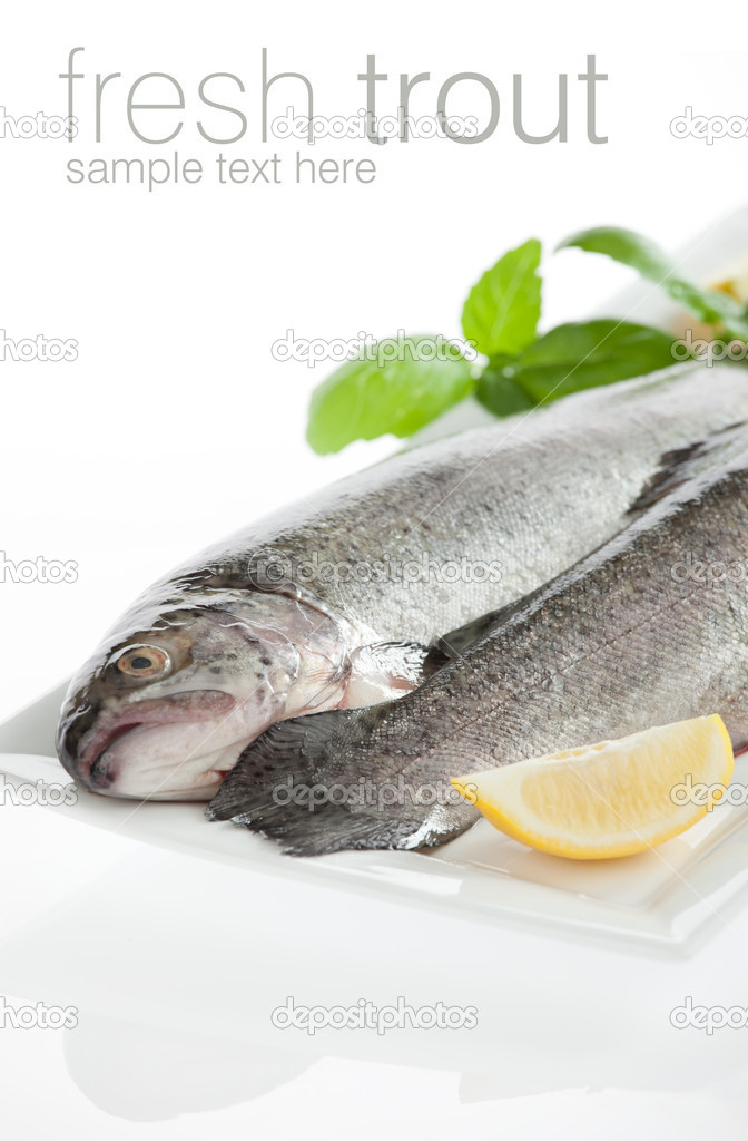 Fresh trout fish isolated on white background angling, animal, b
