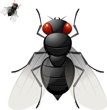 Housefly over white. EPS 10, AI, JPEG stock vector