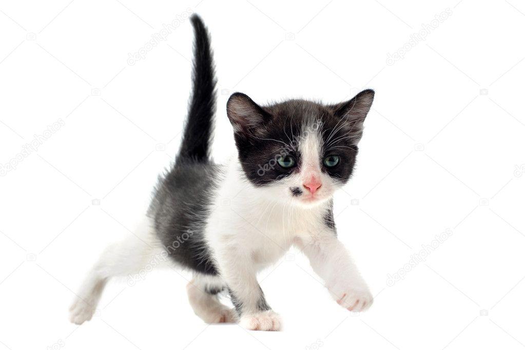 fotky mladých černých kočiček zdarmaoklamal do análního sexu
