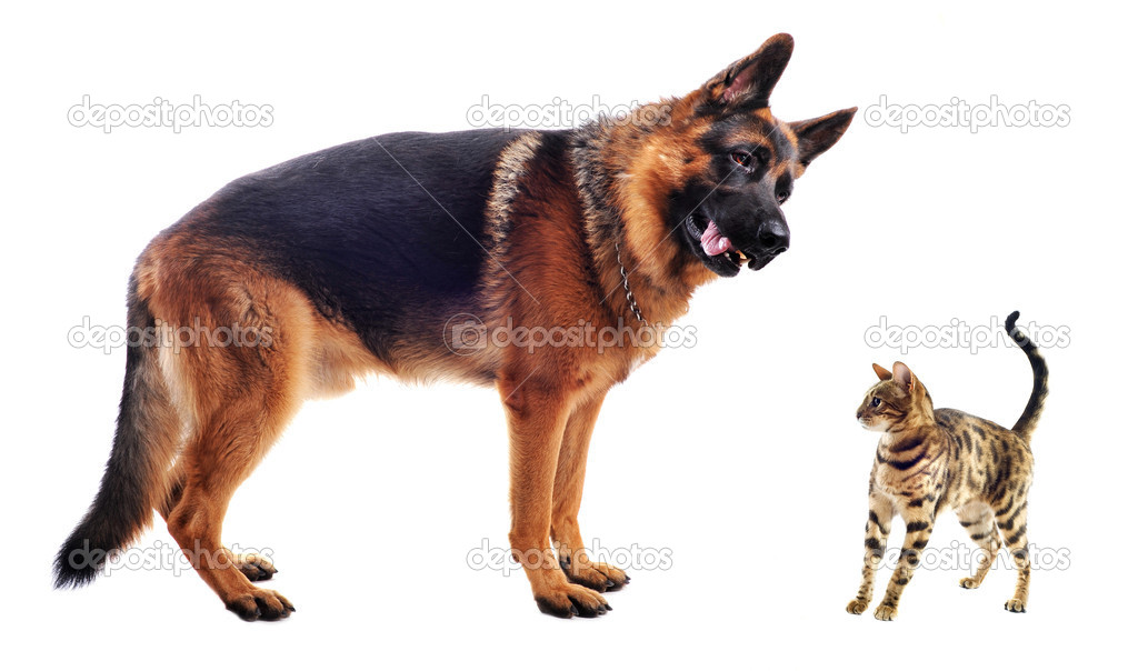 Do Wolf Dogs Bark