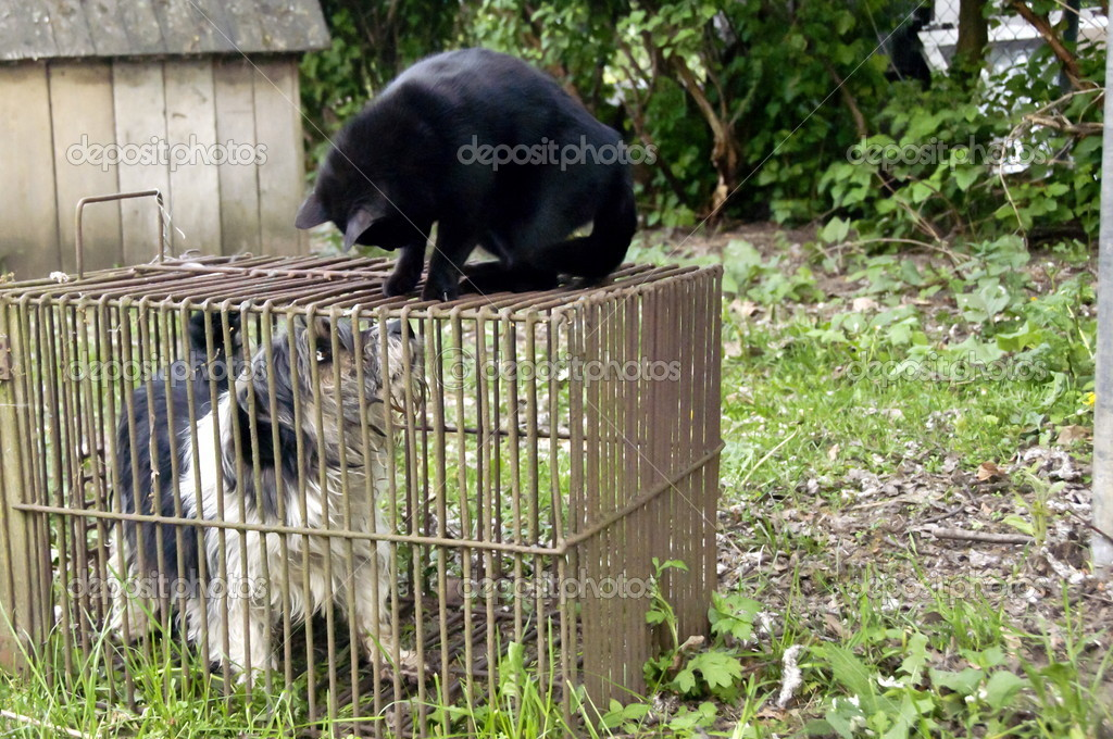 Dog's life in captivity in the cat