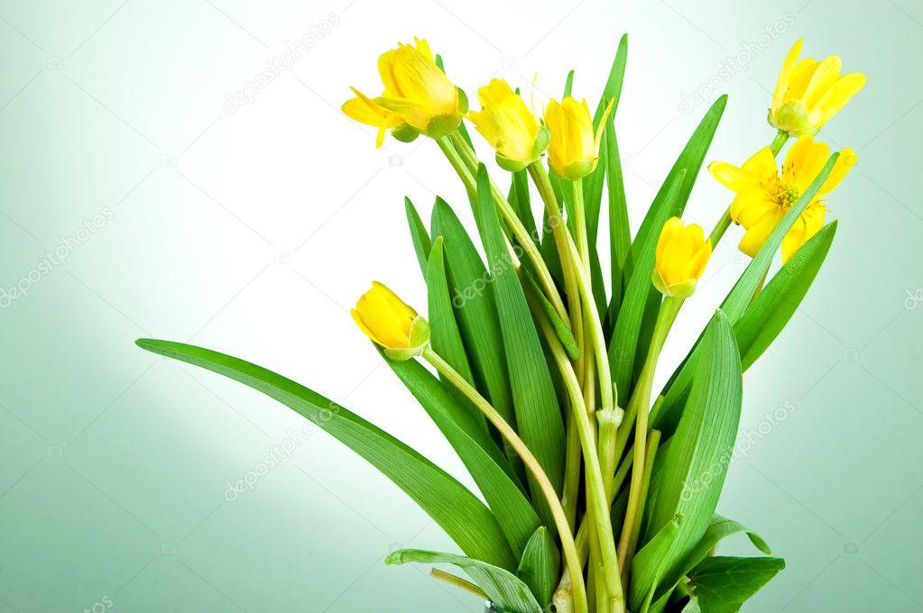 flores de primavera amarillo con hojas de color verde sobre un fondo ...