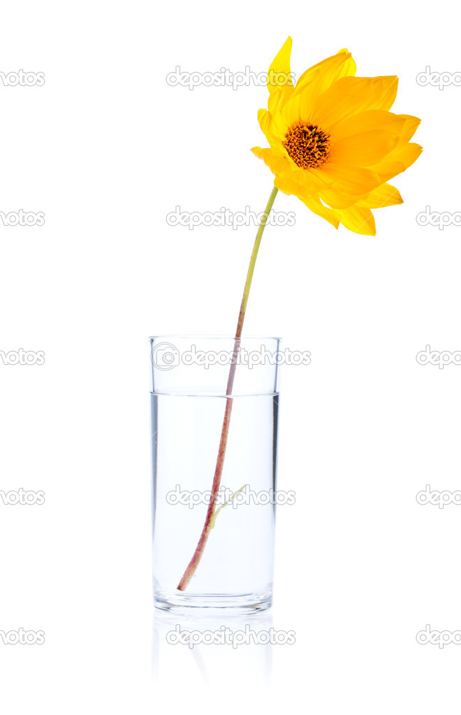Single Fresh yellow flower in glass water Isolated on white back