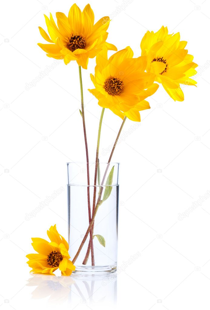 Fresh yellow flowers in glass water Isolated on white background