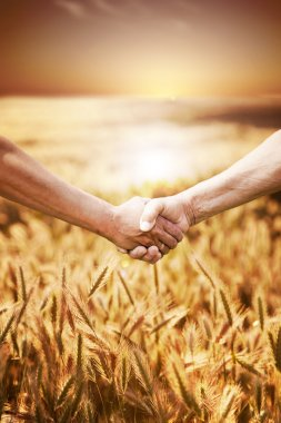 Two farmer's hands handshake at the harvest of wheat field.