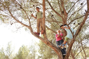 Children discovering and climbing the tree