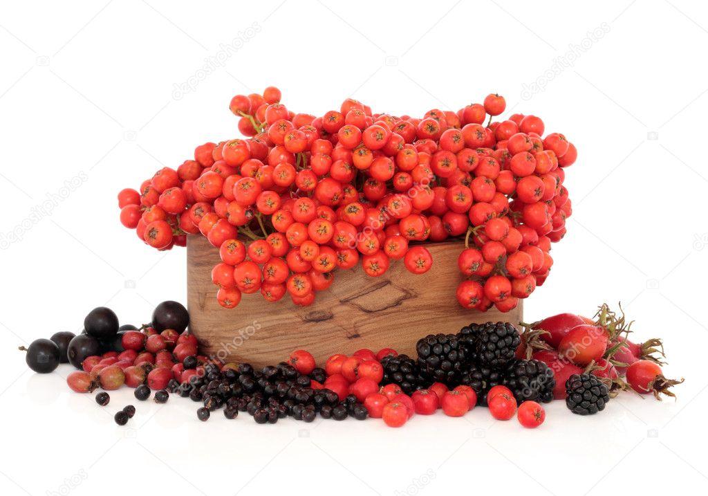 Wild Autumn Berry Fruit