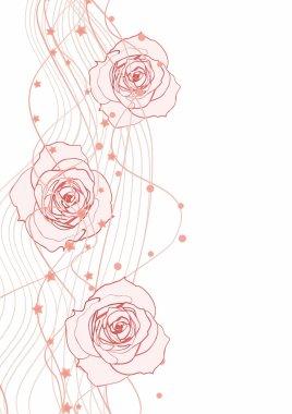 White red vector illustration of roses