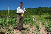 Fotografie Alter Landarbeiter Trinkwasser im Freien
