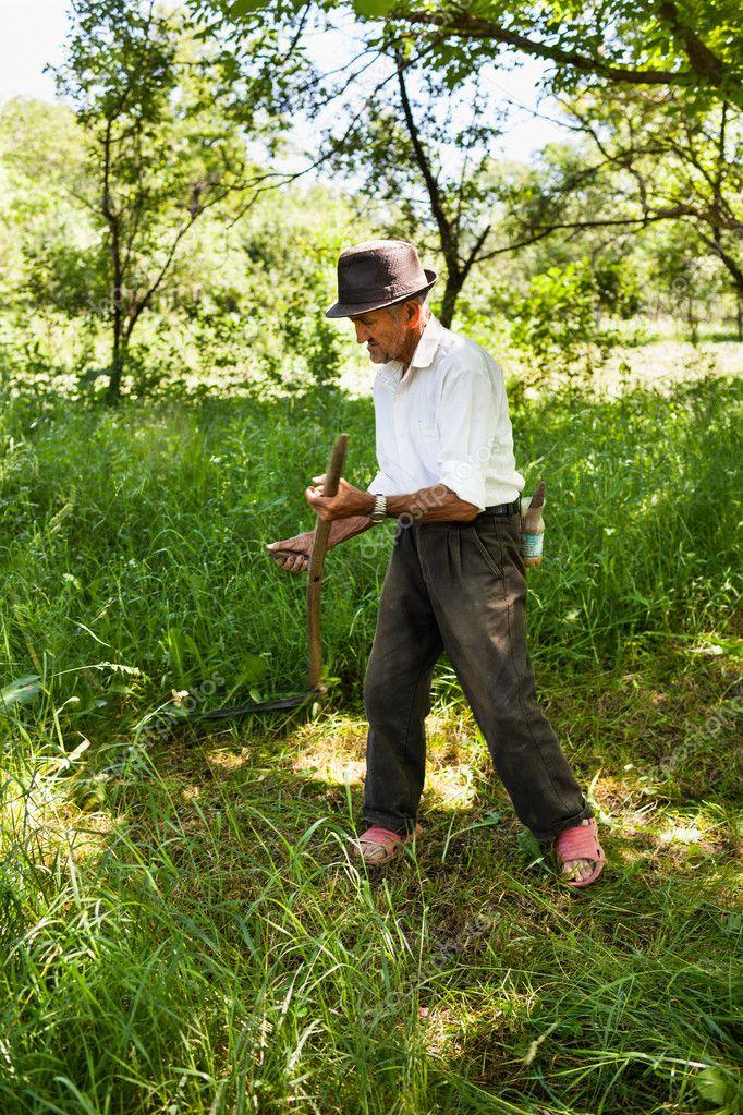 Senior farmer mowing with vintage scythe