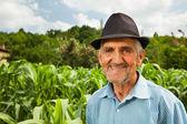 A kukorica a területen a háttérben vezető mezőgazdasági