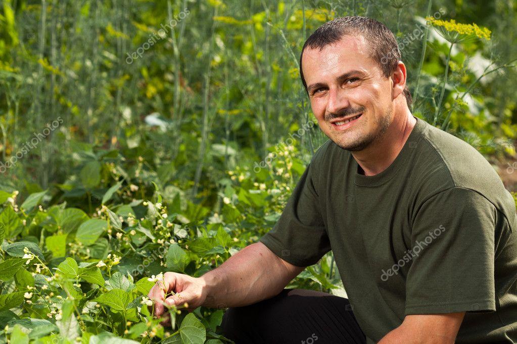 Farmer near a field of broad beans plants