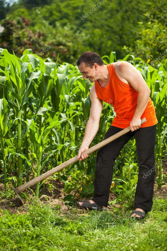 Young farmer weeding in a corn field