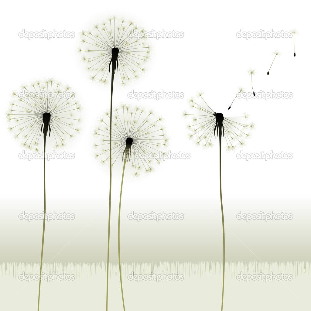 Floral background, dandelion