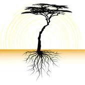 akát strom s kořenovým
