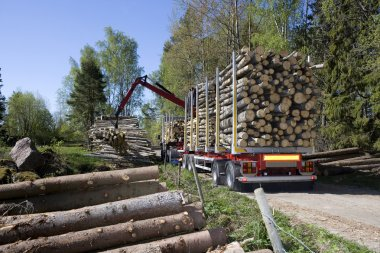 Loading Timber