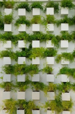Wall grass Nursery
