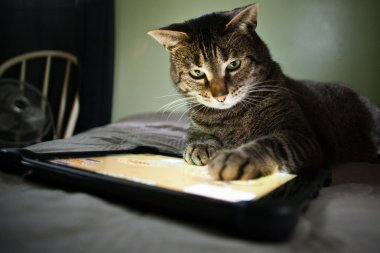 Cat and tablet