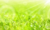 svěží letní zelené trávy