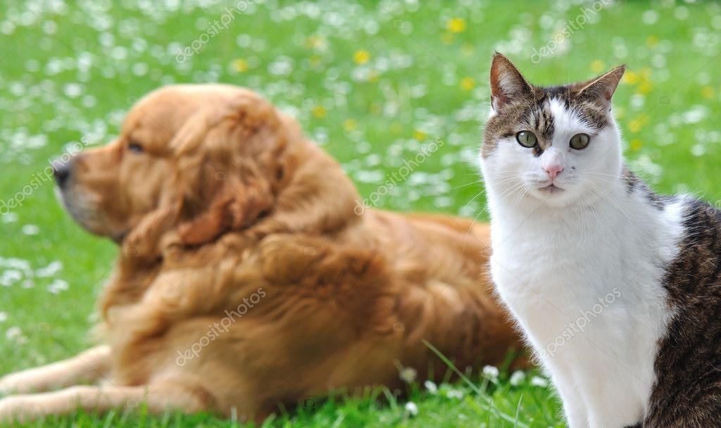 Jak Kot I Pies Zdjęcie Stockowe Sanddebeautheil 10955209