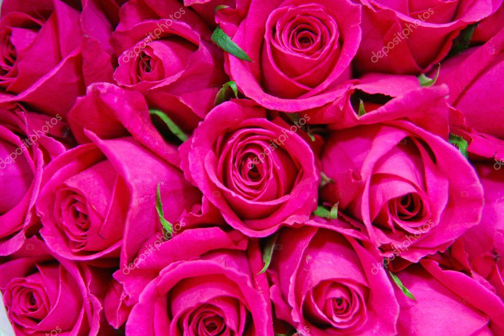 gros bouquet de roses rouges photographie zhudifeng 10735710. Black Bedroom Furniture Sets. Home Design Ideas