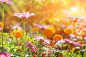 Abstract flowerbed in sunny day