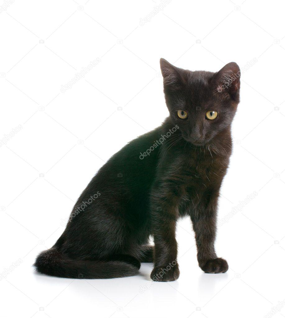 blaack kočička