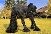 Fényképek Fekete fríz ló