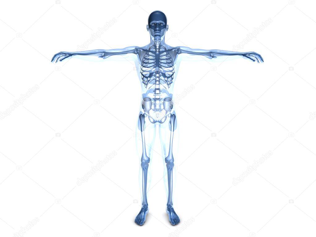 Ausgezeichnet Visualisierung Der Anatomie Und Physiologie Fotos ...